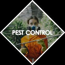 pest%20control.png